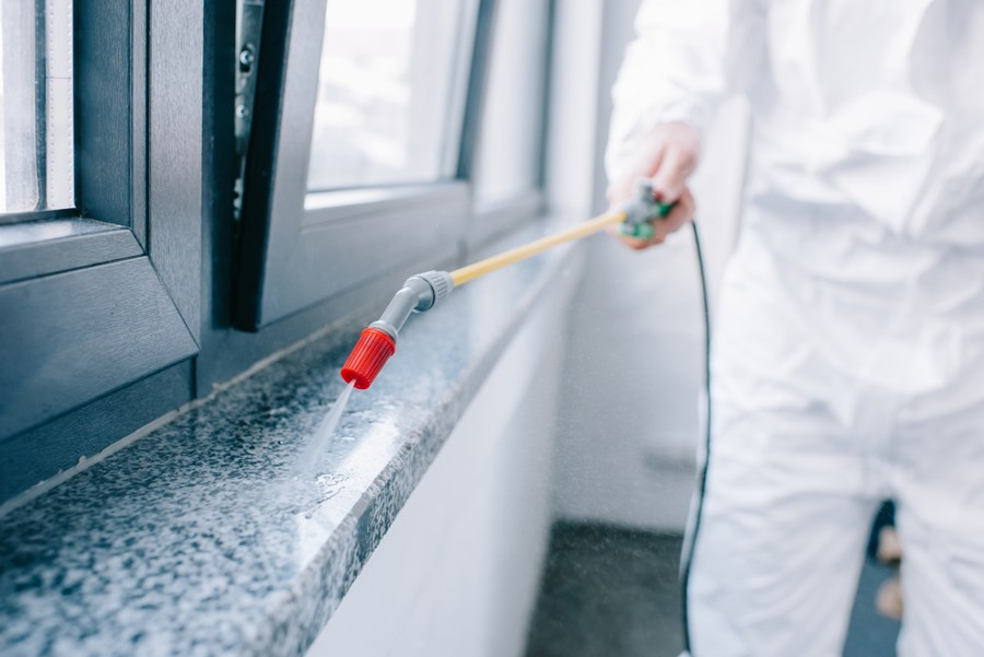 What To Do After Pest Control Sprays