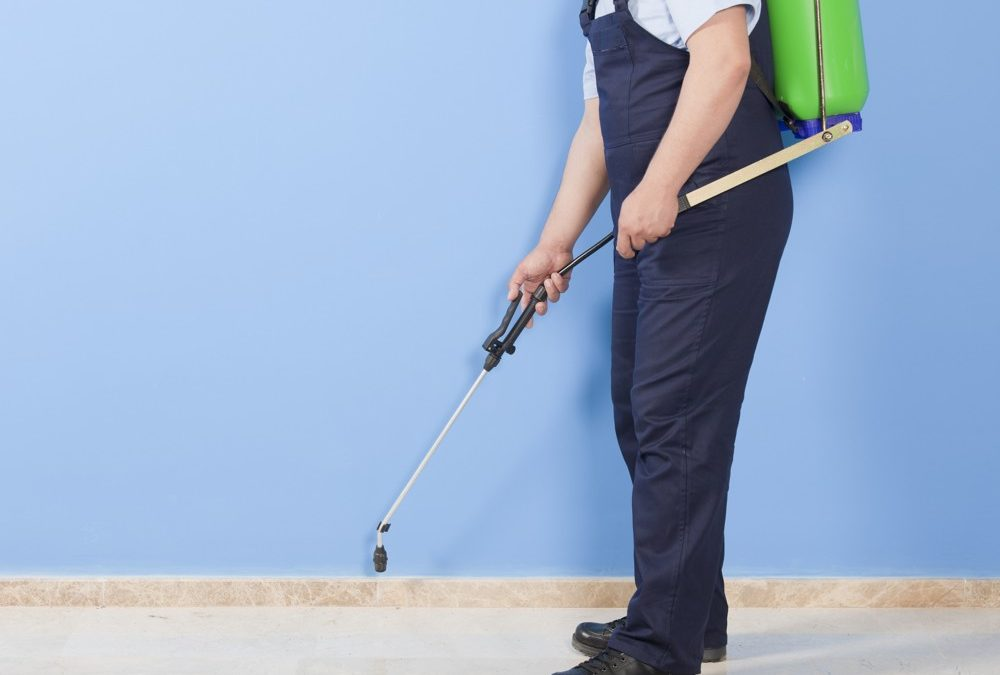 When do you NEED a professional pest control company?