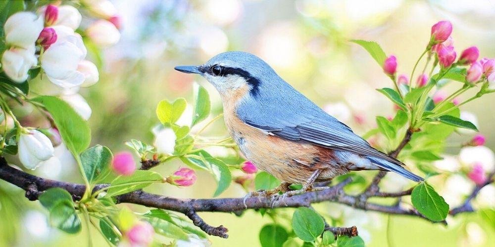 net your garden - bird on branch